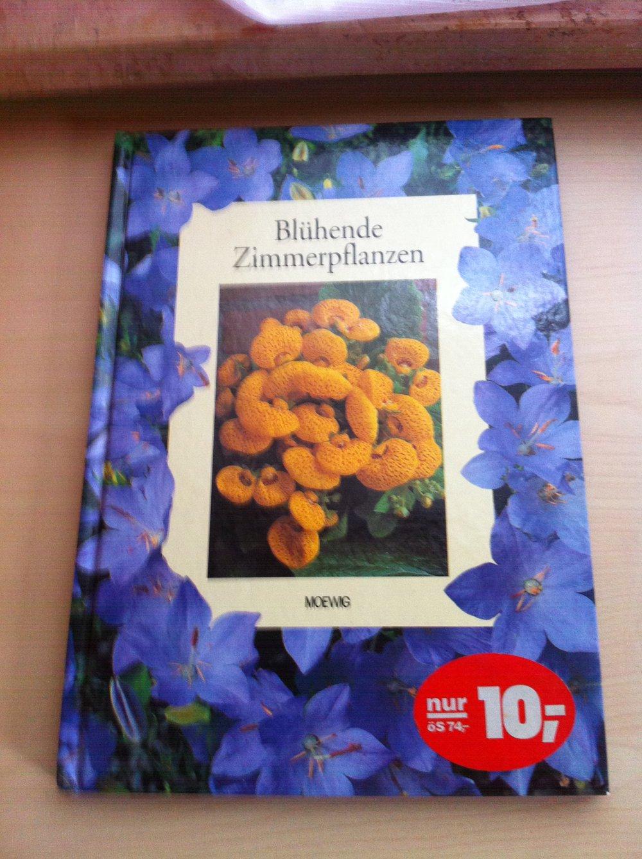 Blühende Zimmerpflanzen blühende zimmerpflanzen kleiderkorb de